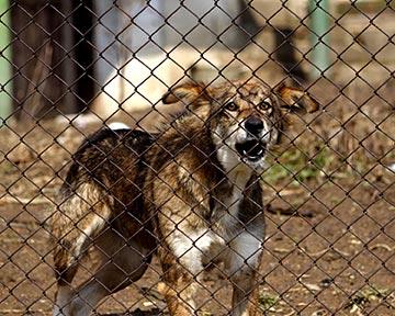Austin Dog Bite Lawyers Austin Animal Attack Attorneys